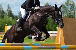 chevaux sport 300x200